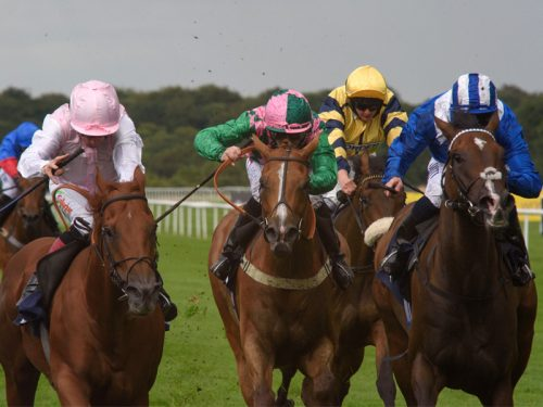 Sheffield & Hallamshire Sporting Club Raceday
